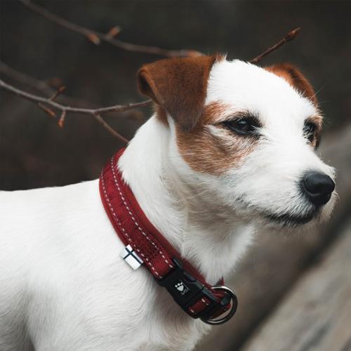 hurtta casual dog collar lingon red
