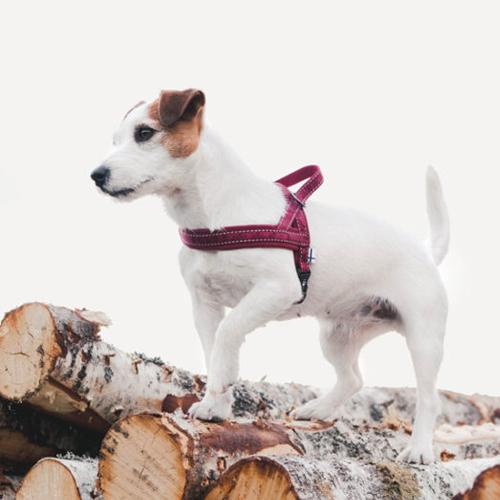Casual Harness dog Lingon