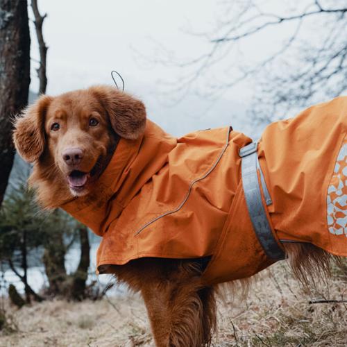hurtta monsoon dog coat buckthorn