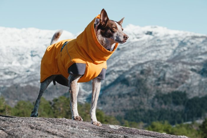 hurtta expedition parka buckthorn dog coat