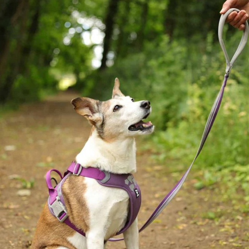 hurtta weekend warrior dog harness and lead