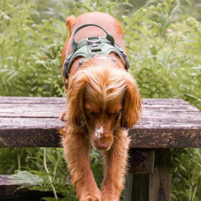hurtta weekend warrior doh harness hedge