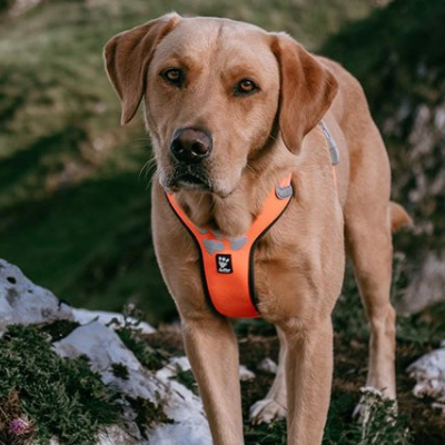 hurtta weekend warrior dog harness neon orange
