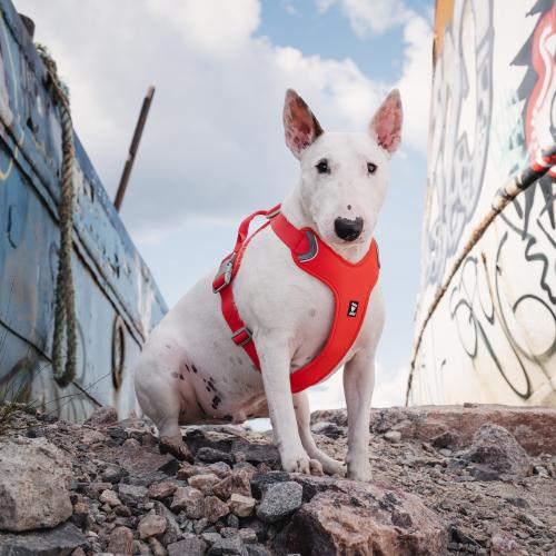 hurtta weekend warrior dog harness eco rosehip red