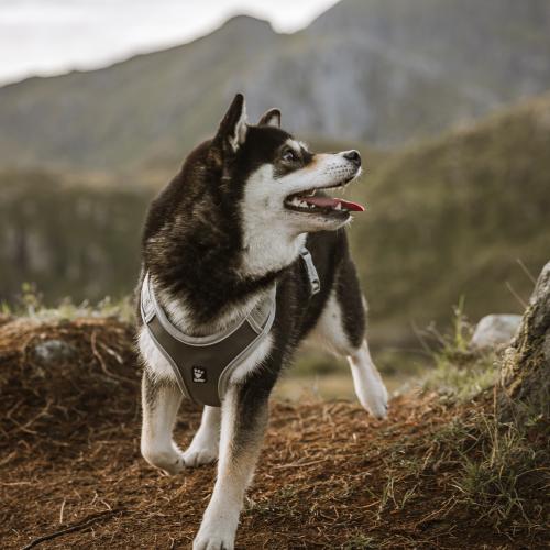 hurtta venture dog harness shadow