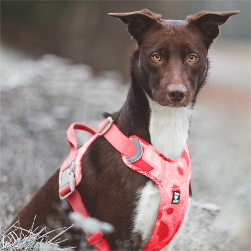 hurtta weekend warrior dog harness coral camo