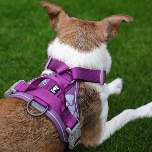 hurtta weekend warrior dog harness currant