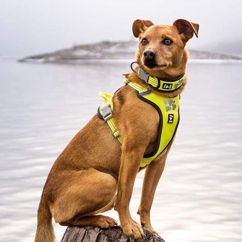hurtta weekend warrior dog harness neon lemon high visability