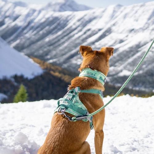 hurtta weekend warrior dog collar and harness park camo green