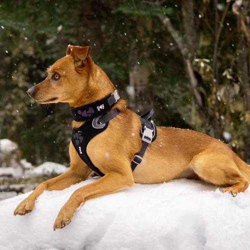 hurtta weekend warrior dog harness and collar raven black