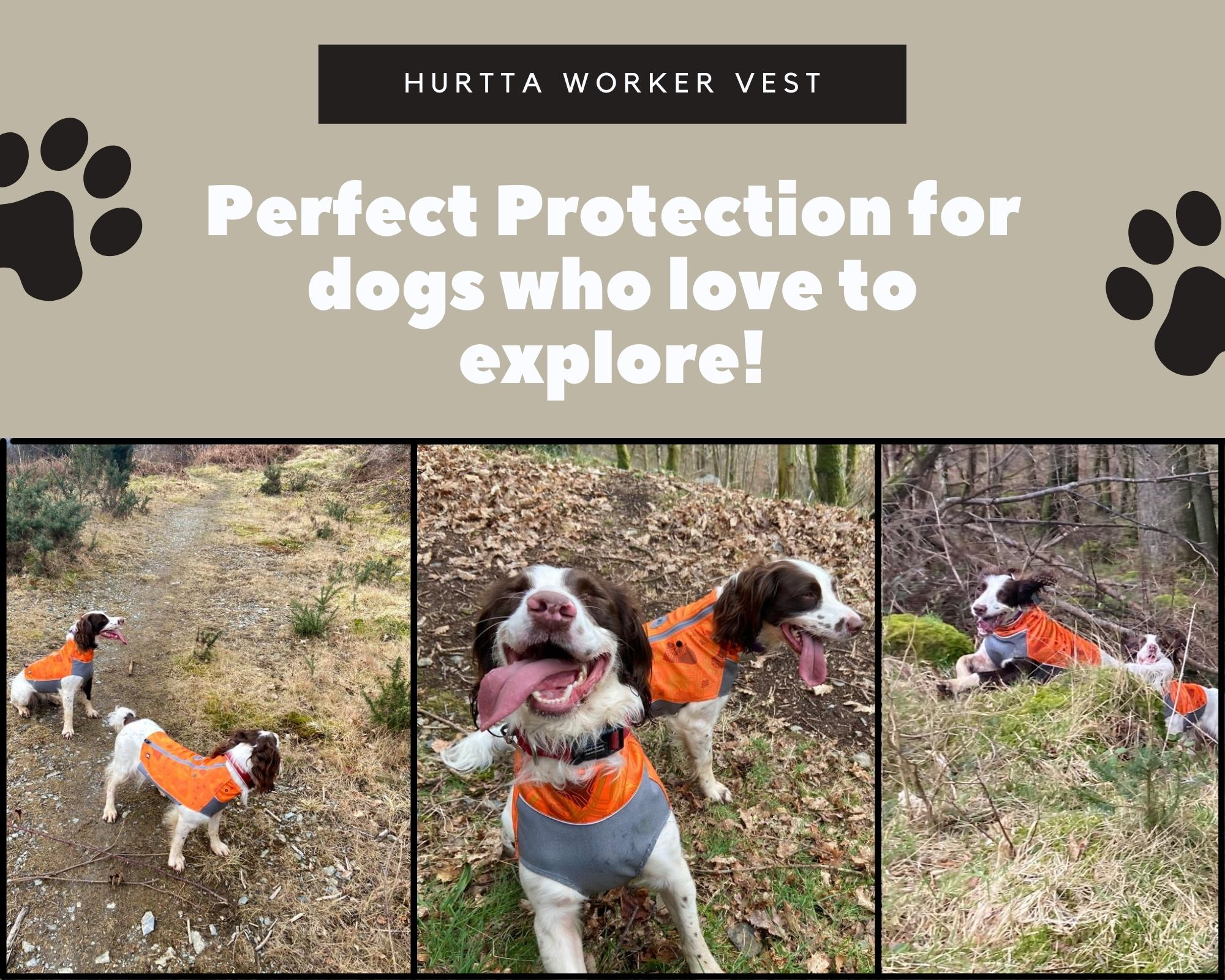 Hurtta Worker Vest spaniels in woods protection