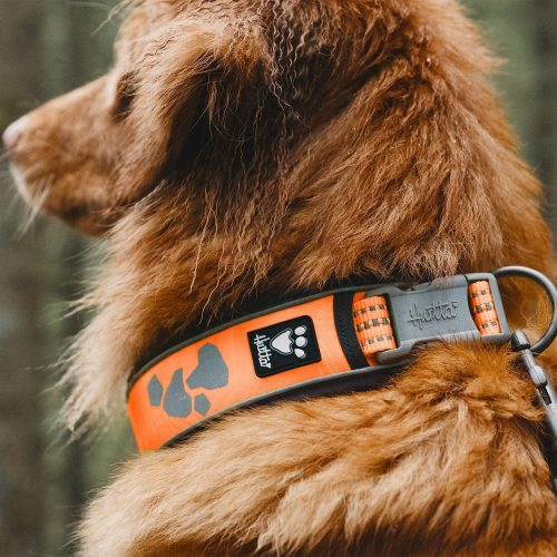 weekend warrior collar neon orange on brown dog