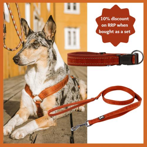hurtta cinnamon set harness collar leash