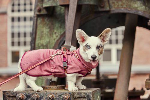 hurtta razzle dazzle beetroot dog harness lead midlayer