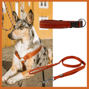 hurtta cinnamon harness leash collar set