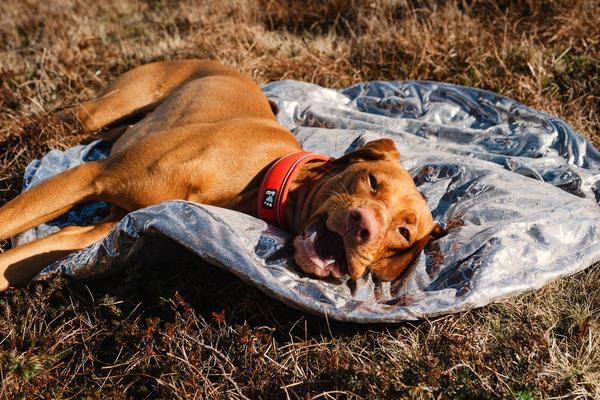 outback dreamer dog sleeping bag hurtta
